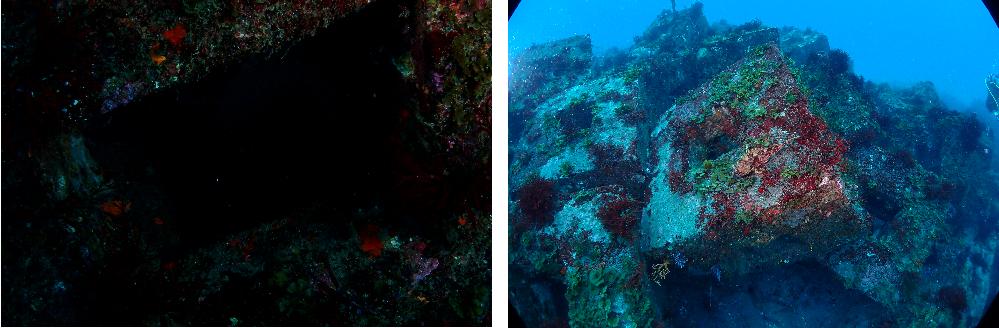 スキューバーダイビングで水中写真を撮っています。 機材はTG-6・ストロボ2灯(YS-D3 LIGHTNING)・INON ドームレンズユニットなのですが、全然使いこなせず、たまに添付写真(左)のようにストロボは発光するのに黒くなってしまいます。 右側は同じ構図ではないですが、同じ場所でフラッシュオフにして撮ったものです。 発光はしているようなので、効いてないことはないと思うのですが・・・。 特にマクロ撮影で黒くなりがちな気がします。 何か解決方法はありますでしょうか。 どうぞよろしくお願いいたします。
