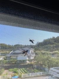 家の窓に数匹現れたんですが、何という蜂でしょうか?毒がある刺す蜂ですか?