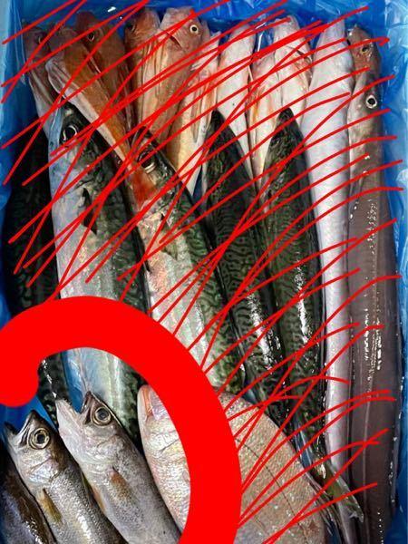 赤で囲んでる端の魚はなんでしょうか?全体が写ってないので分かりにくいかもしれませんが背びれは結構ギザギザ(?)でした。 分かりにくいのでなんとなくでも構いません!