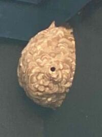 これは何の種類の蜂の巣でしょうか?