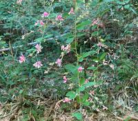 これは何という植物でしょうか? 撮影は9月です。