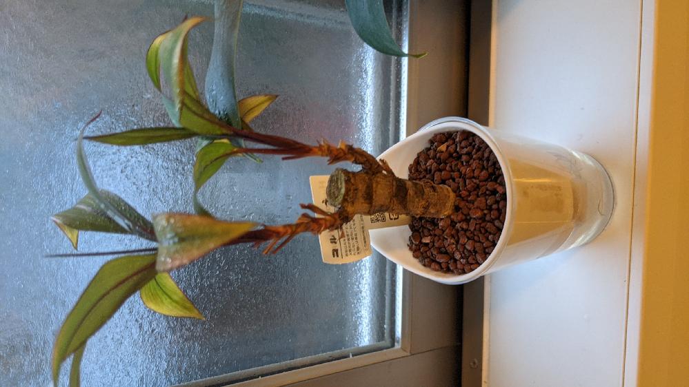 観葉植物に関する質問です。 ハイドロカルチャーというのを育てています。石の表面に白カビがします。毎日、葉と石の表面にスプレーで水に液肥やHB101を薄めたものをかけているのが原因でしょうか? どのような管理がベストでしょうか?