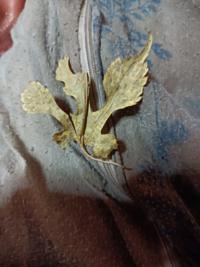 写真の葉っぱはなんの葉っぱですか?