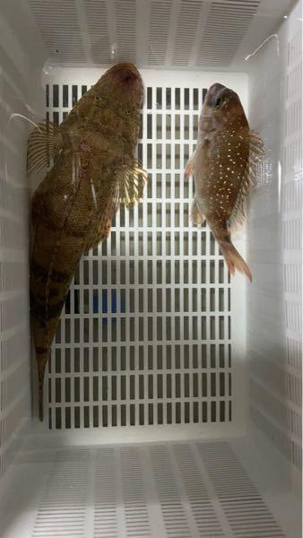 この2匹の魚の種類はなんでしょうか? 友人から貰いましたが、食べても問題ないか伺いたいです。