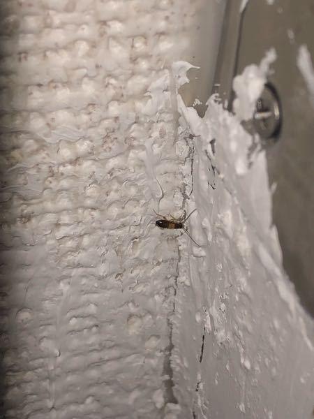 家にいるこの虫の名前を教えてください。