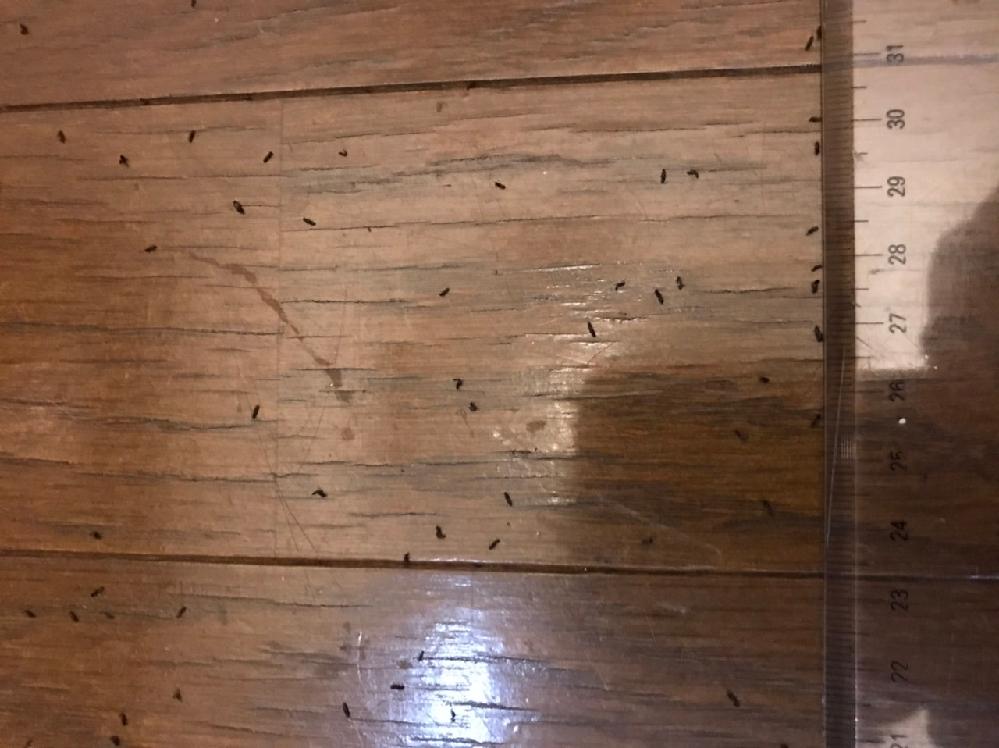 夏ごろから夜、玄関の灯りの下に黒い小さな虫がたくさんいます。朝になると死んでいます。特に刺したり噛んだりしないので、害はないのですが、気持ち悪いです。 網戸をすり抜ける虫、で検索したらクロバネキノコバエというのが出てきましたが、それとは違うような形です。 カメラが良くないので写りが悪いですが、写真を載せます。