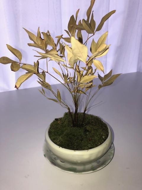 苔盆栽についてです。 1か月位前に苔盆栽を買って、表面が乾いたら水をあげて葉っぱにも霧吹きで 水をあげていましたが、ここ1週間くらいで急に色が変わってしまいました。 この状態で復活出来るのであれば試してみたいのですが、どうにもこうにも 方法がわかりません。どなたかこういった植物に詳しい方教えていただければと 思います。植わっている木の種類は不明です。