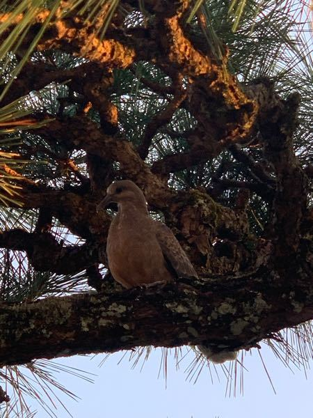 これはなんの鳥ですか?