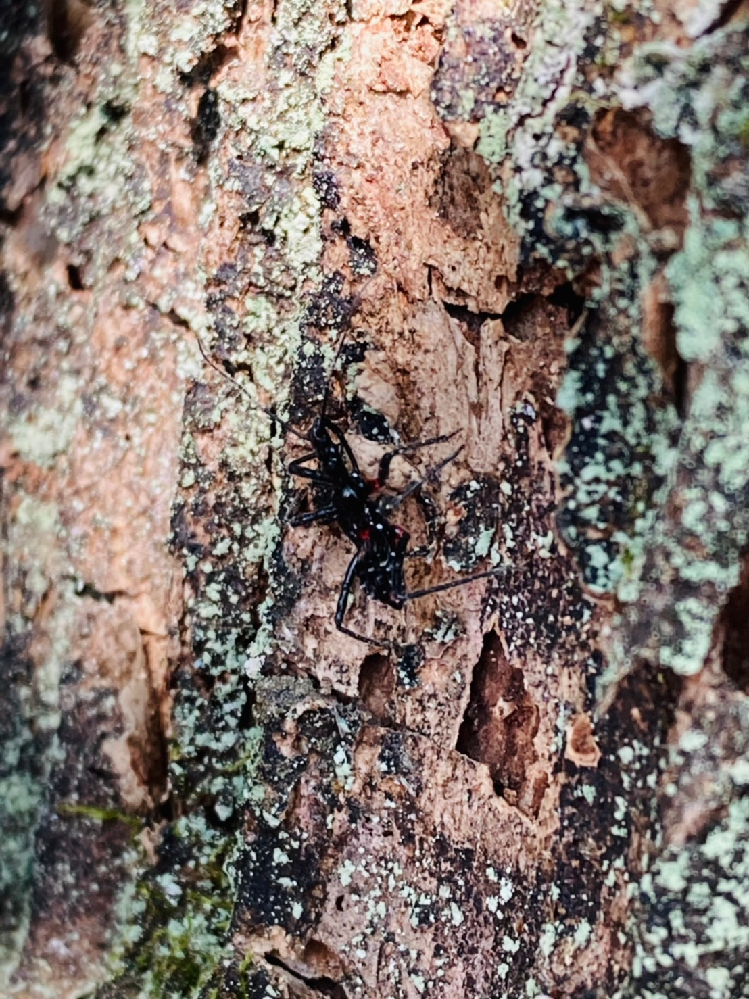 この虫の名前が分かる方いらっしゃいませんか? 画像が分かりにくいかもしれず申し訳無いです。