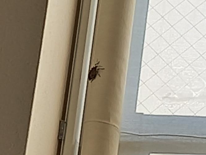 虫についての質問です。 この虫、なにかわかりますか? 黒と白が混じってます。 戸をしっかり閉めているのですが、朝起きたらいました。 毎日居ます。 昨日もいたので逃がしました 戸を開けたら必ず来ます。 だから最近は開けなかったのですが普通にいました。 どこからはいってくるんでしょう... 虫が嫌いなので結構辛いです しかも自分の部屋だけにめっちゃ来ます。 前飼っていた鳥が虫に転生したのでしょうか? 友達の所には来ないと言っています。