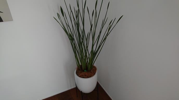 観葉植物の名前を教えて下さい。