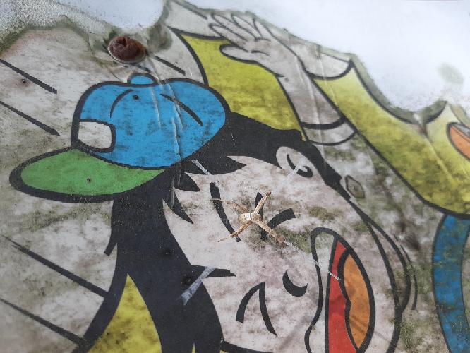 この蜘蛛は何と言う名前の蜘蛛でしょうか。 宜しくお願い致します。