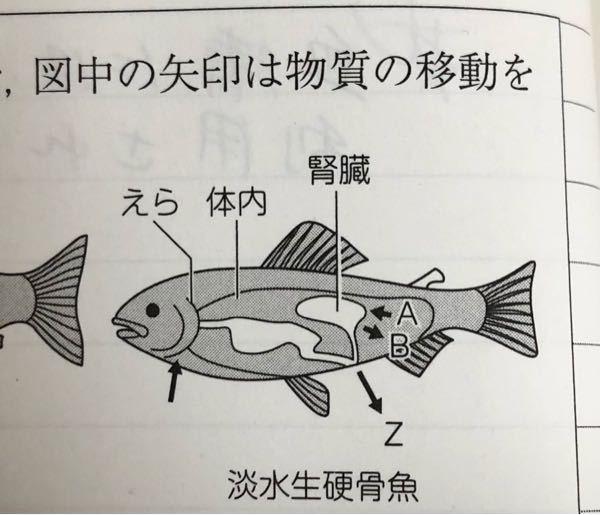 この図で、淡水性硬骨魚の腎臓での無機塩類の積極的な移動の方向を示す矢印として適当なものを、A、Bから選べ。 という問題で、答えは再吸収するってわかるのですが、なぜBの向きが再吸収なのですか? Aの向きの方が体内を刺してるように見えるから吸収だと間違えてしまいました…。