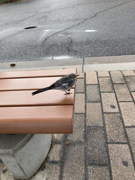 つい先程、宝塚市内で撮影した鳥の写真です。 人に慣れているのか、全然逃げません。 なんという鳥でしょうか?