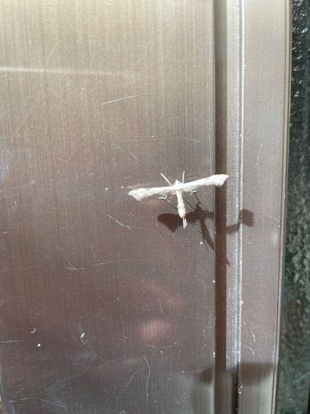 この虫の名前分かりますか? よろしくお願いします。