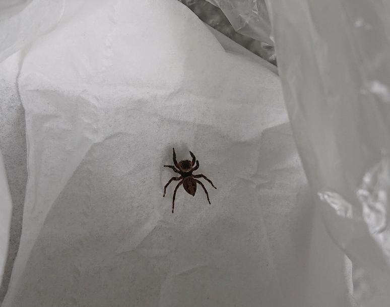 この蜘蛛の種類ってなんでしょうか?