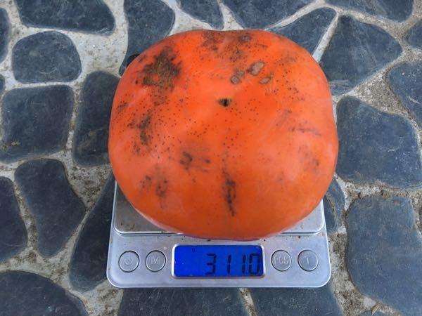 八珍柿は完熟すれば甘くなるのでしょうか? 我が家に八珍柿と思われる柿があります。 オレンジ色のときに食べたら若干渋かったので間違いないかと思ったのですが、真っ赤になってやや弾力が出てきたものを食べたところ超絶ゲロ甘でした。 ちなみに断面の色は普通の柿と同じくオレンジ色でした。 しかしネットで調べると、どこも八珍柿=渋抜きして食べると書いてあり、完熟すれば甘くなるのかについては書いてありませんでした。 八珍柿は完熟すれば甘くなるのでしょうか? それともうちの柿が八珍柿ではなく別の品種なのでしょうか? 詳しい方、回答をお願いします。