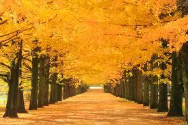 今の時期に聴きたい、秋に似合う曲は何ですか? ジャンルは問いません。