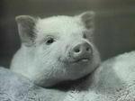 「最高級松阪肉を安物バーゲン肉に醸成する装置」を開発したら、 *次回の「くだらない大賞」はもらえるでしょうか aozora