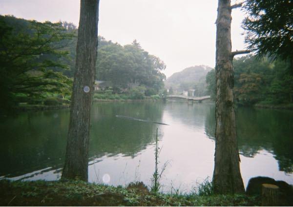 トイカメラで町田の薬師池撮った写真なのですが オーブのようなものが見えるような気がします。 撮った日は小雨でした。 カメラのせいなのか それともほかの何かなのか教えてください。