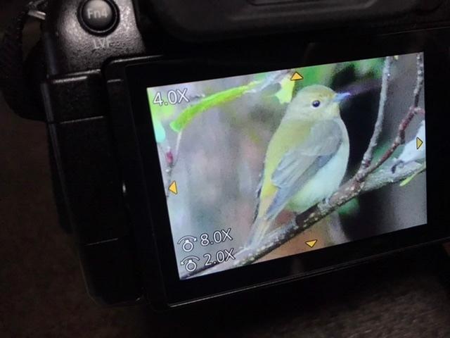 この鳥は何という鳥ですか? ご存知の方教えてください。 よろしくお願いします。