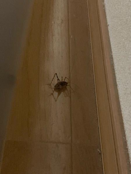 お家に居たんですけど、これはなんて虫ですか?? カサカサ動いてゴキブリかと思ったんですけど足が長くて分からないです。 教えてください