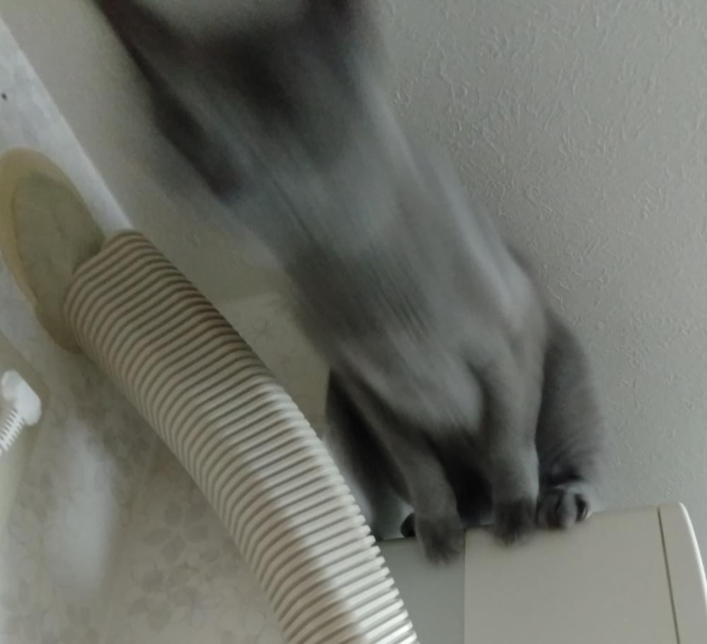 猫ちゃんが拗ねてしまいました。 私はもう助かりませんか?