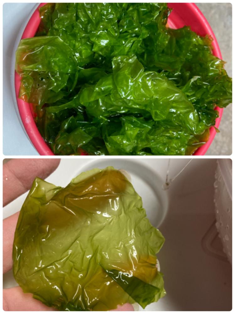 この海藻(海草?)はアオサでしょうか? 海の中の砂地に生えてました。 手触りはプラスチックのような感じです。 場所はアメリカの東海岸です。 食べても問題ないでしょうか…?