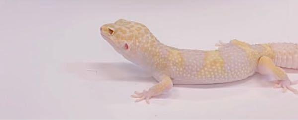 この動物なんて名前ですか?