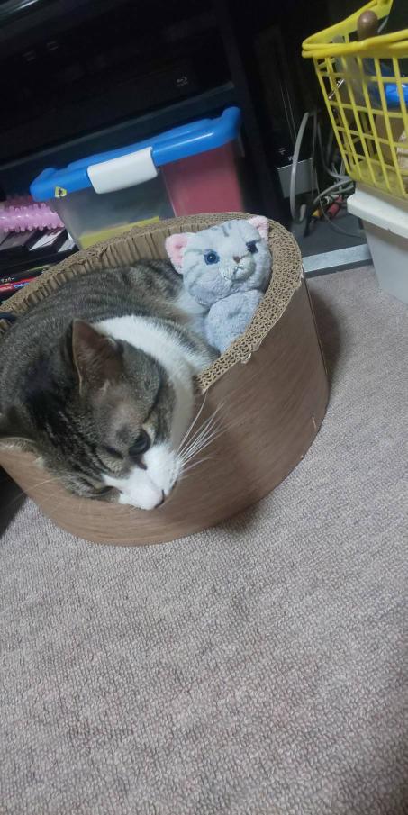 この猫を見て、どう思いますか?