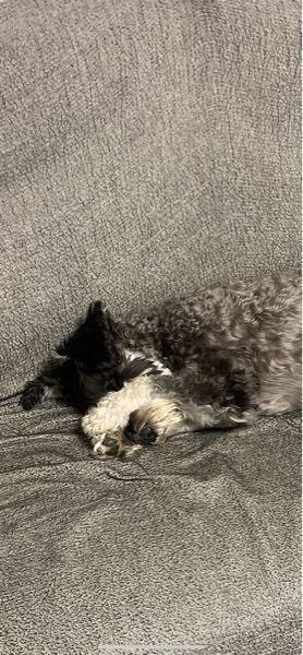 犬ってなんでこういう寝方をすることがあるんですか?
