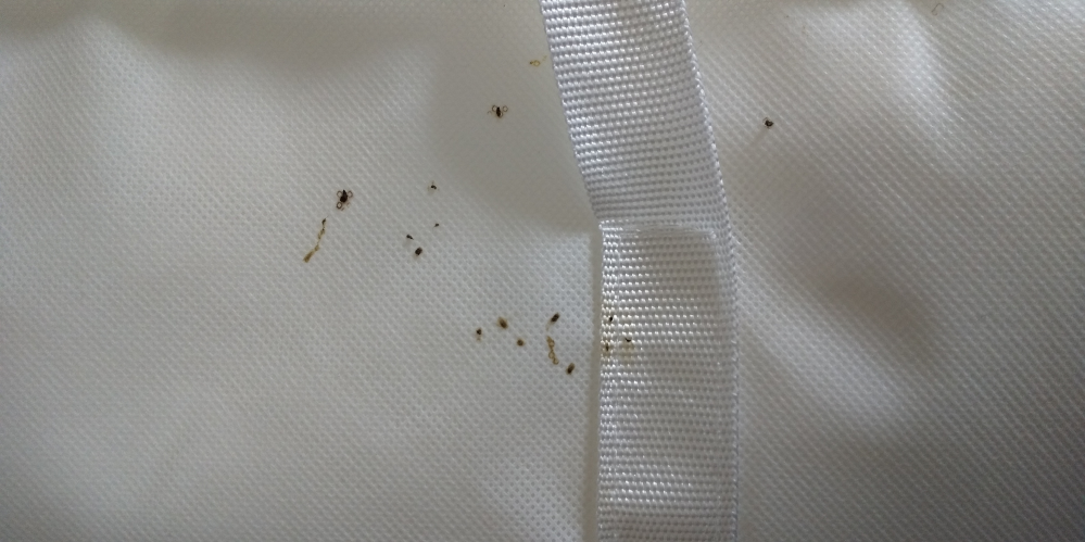 収納バッグについていたのですがこれはなんですか? ゴキブリのフンでしょうか? 数ヵ月前にゴキブリをみてます。