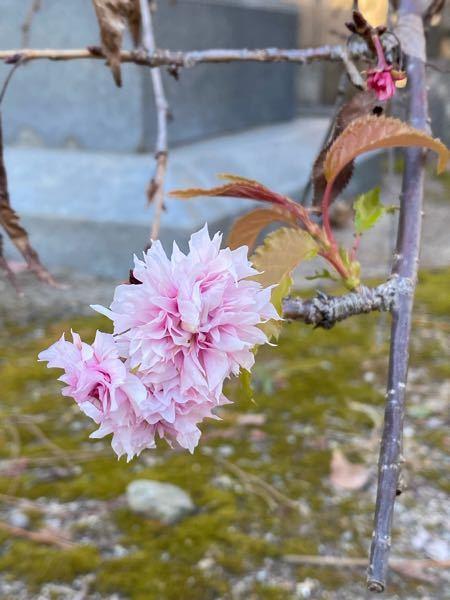 この植物の名前を教えてください。 よろしくお願いいたします。