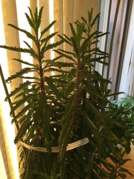 この植物の名前教えてください。 オレンジの花が咲きます。