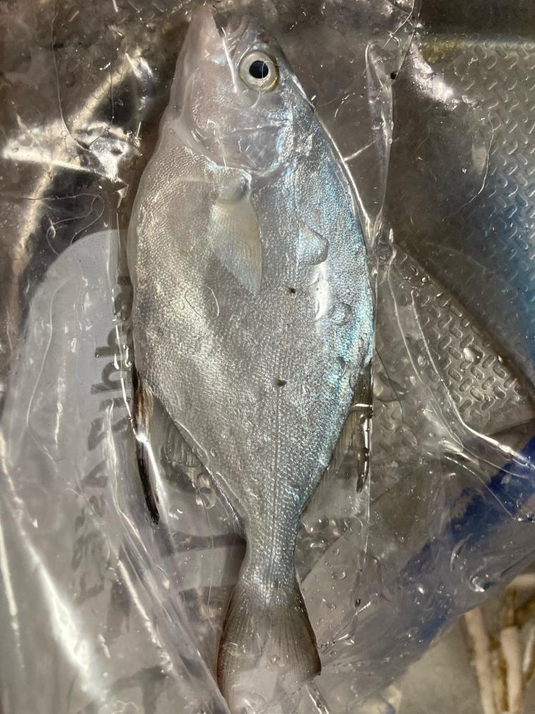この魚って何か教えて下さい