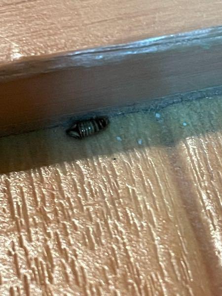 部屋に気持ち悪い虫がいました。 なんの虫?幼虫?でしょうか? 教えて虫博士!