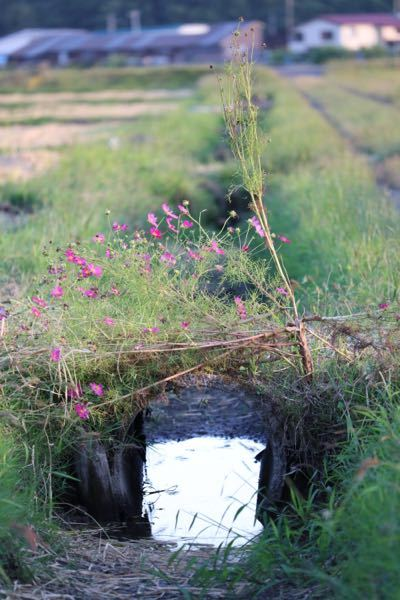 この花なんですか? 9月頃に田んぼで見つけました