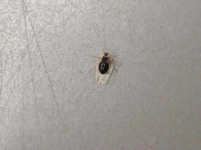 この虫は何ですか? 小さい虫です
