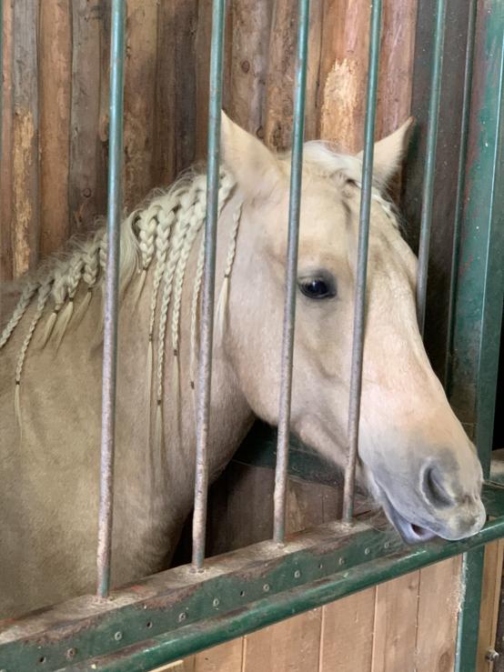 ワールド牧場 本日10/24 ワールド牧場にいってきました。 お馬さんにおやつをあげた時なんですが、白馬の子で、たてがみが三つ編みにしてる馬がいました。 子供と写真撮ったりしてましたが、馬の名...