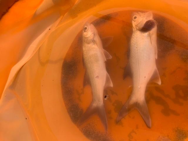 魚の種類教えて下さい。