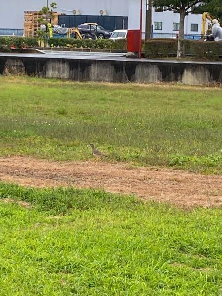 この鳥はなんで名前ですか?滋賀県です。