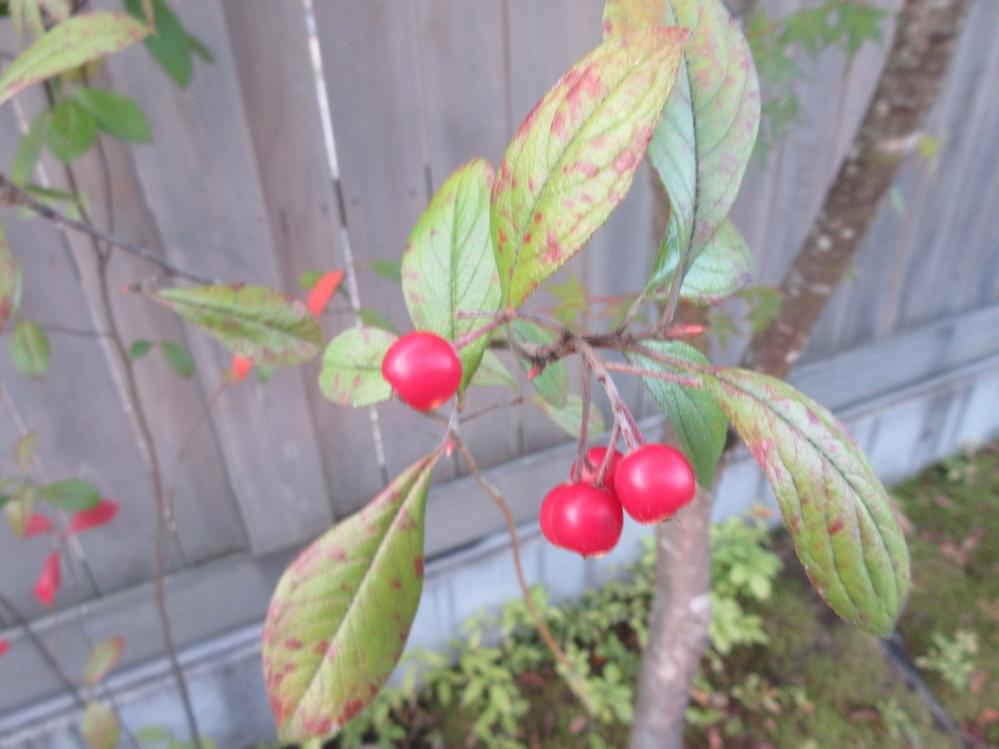 この植物の名前を教えてください。