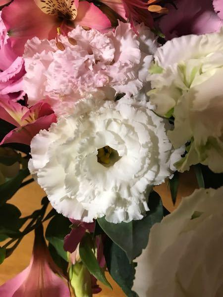 アレンジフラワーを頂きました。この花の名前を教えて下さいよろしくお願いします。後この花は挿し木出来るでしょうか?