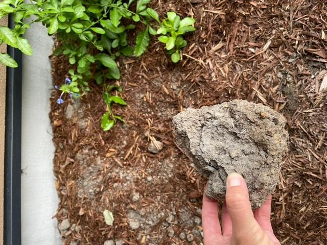 我が家の庭についてです。 たくさんの木々や花が植えてあり、樹皮のマルチがひいてあります。今年の7月に業者さんに作っていただきました。ただ、最近、土が固まり、写真のようなものがごろごろでてきます。...