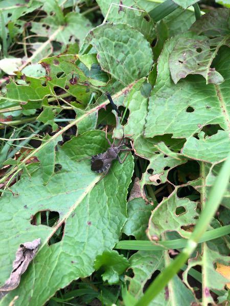 今日散歩をしていて見かけたこの虫は何という種類ですか? 初めて見ました。