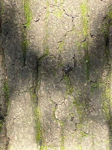 木についてたこの虫は何ですか?