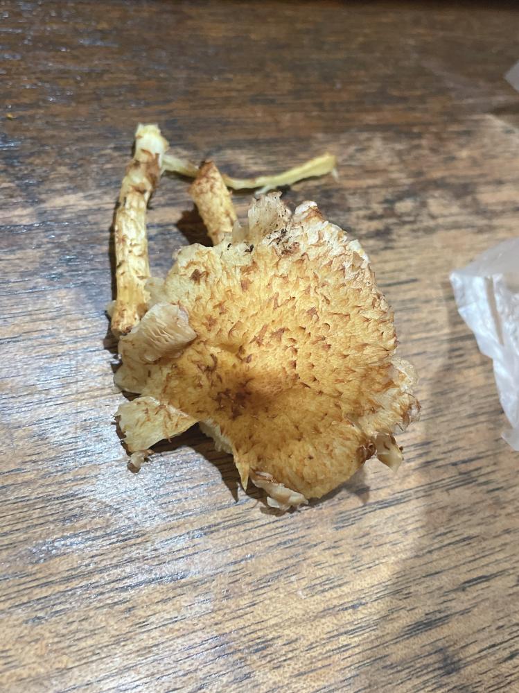 このきのこはなんて名前かわかりますか? 食べられるものでしょうか?