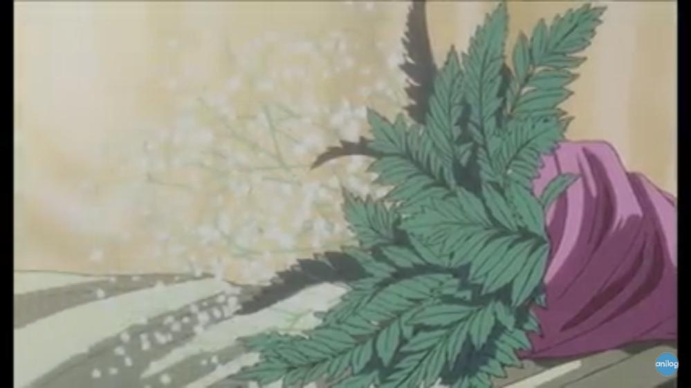 この植物の名前がわかる方がいたら教えてください