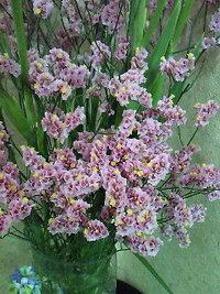 この花の名前を教えてください。ドライフラワーみたいに乾燥した感じです。そのままにしていたらドライフラワーになりますかね?