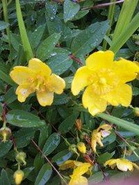 熊野古道に咲いていたのですが、なんという花ですか?